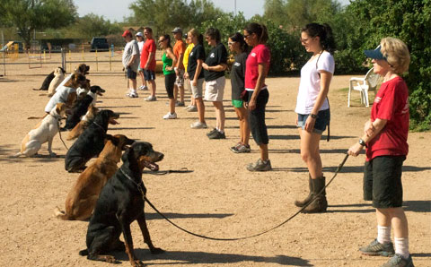 Group-obedience-class-raleigh