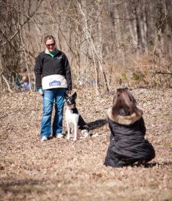 Christie Training Dog