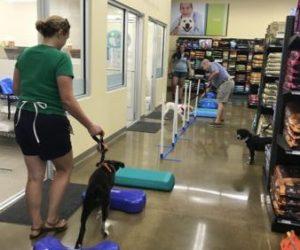 puppy-agility-11