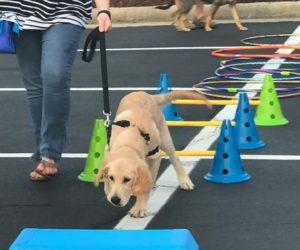 puppy-agility-4
