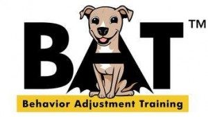 Reactive Rover BAT Dog Training Class