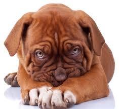 Fearful Fido scared Dog Training courses