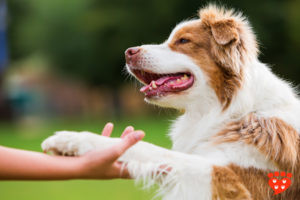 Why Positive Training is the Answer for your Dog