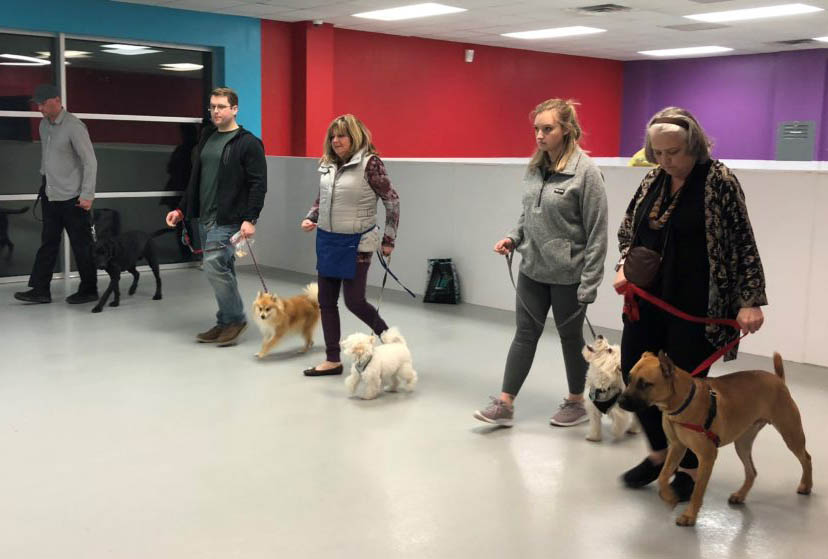 Basic-Obedience-Dog-Training-Raleigh